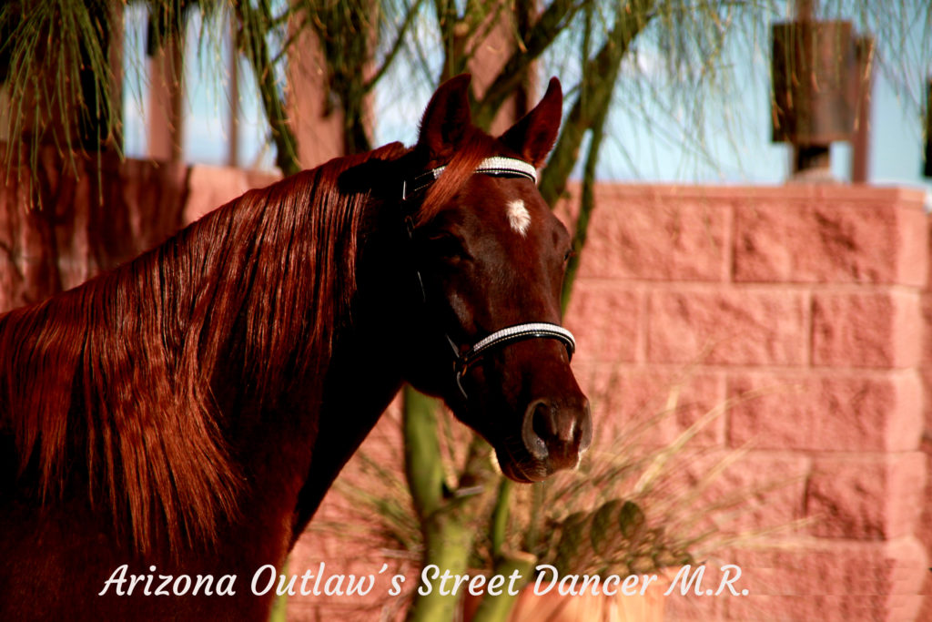 Arizona Outlaw´s Street Dancer M.R