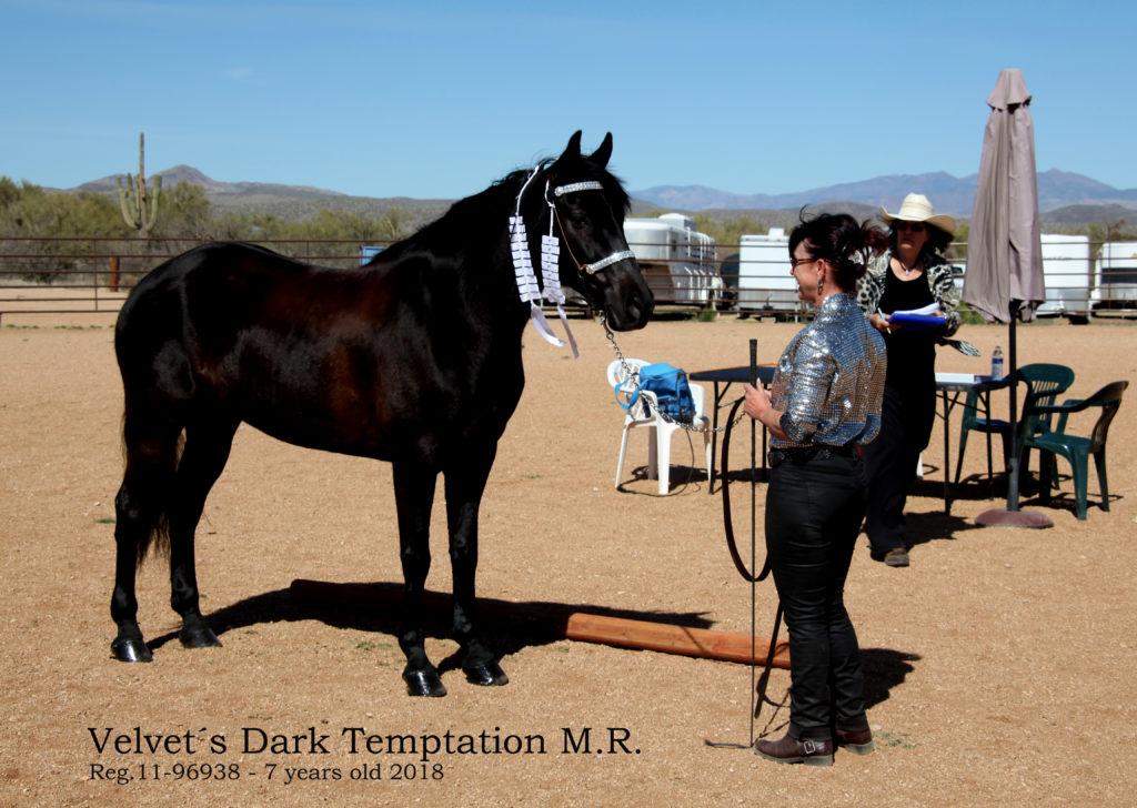 IMG_0187 Velvet´s Dark Temptation M.R.