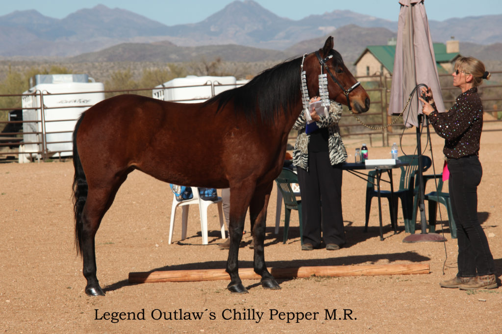 IMG_0270 Legend Outlaw´s Chilly Pepper M.R.