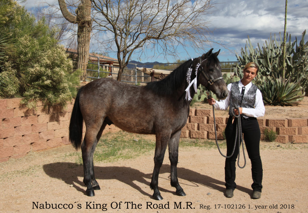 Nabucco´s King Of The Road M.R.1
