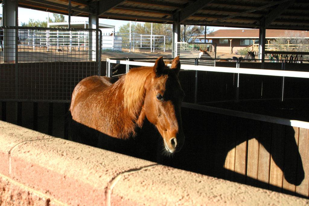 Round Pen -Free Horses C15