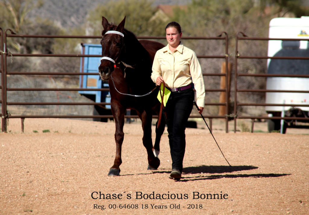 IMG_0258 Chase´s Bodacious Bonnie