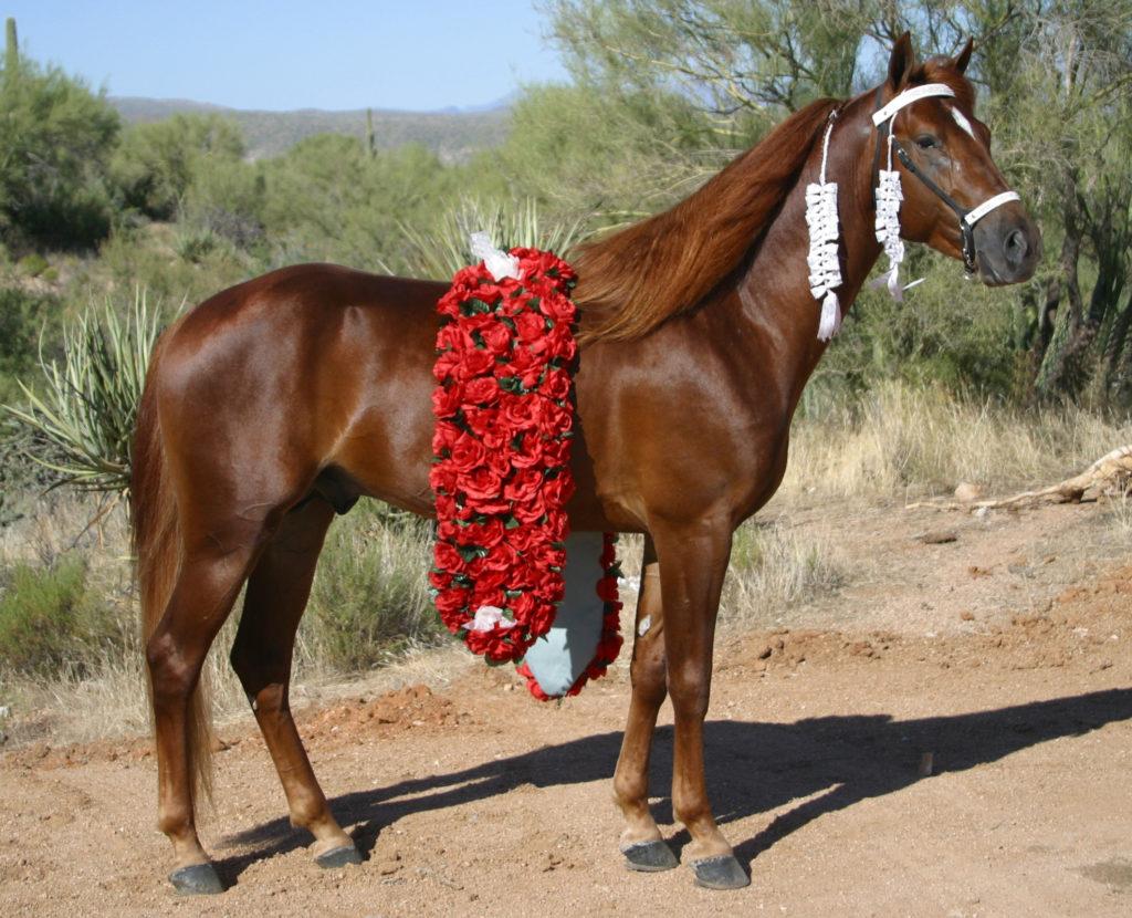 Arizona Outlaw M.R.